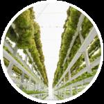cultivos indoor